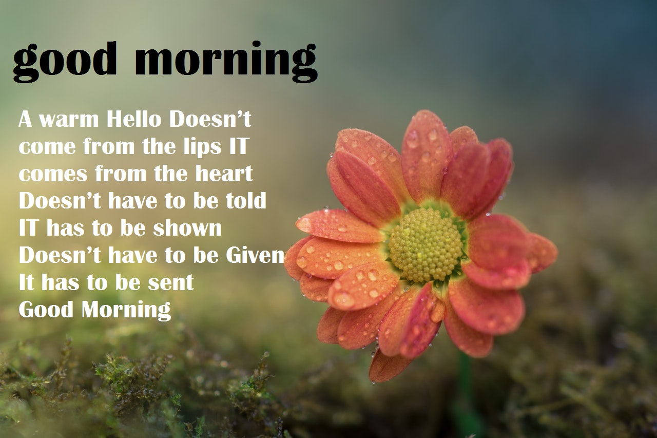 Beautiful Good Morning Images With Flowers Free Download Sharettumb